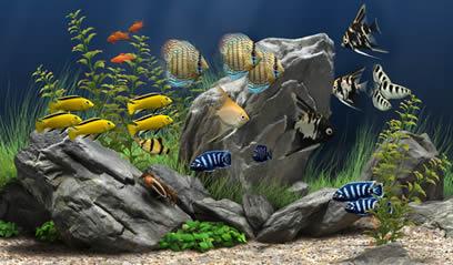 fond d'ecran anime aquarium windows 10